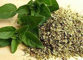 خواص گیاه دارویی اورگانو یا پونه کوهی