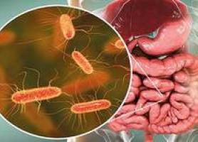 روش هایی برای بهبود باکتری های روده