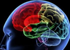 این عصاره عملکرد مغز را دو برابر می کند
