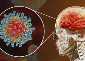 کرونا با مغز انسان چه می کند؟