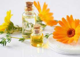 خواص درمانی گل همیشه بهار یا کالاندولا