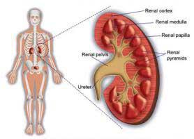 بیماری گلومرولونفریت ؛ علل، علائم و درمان آن